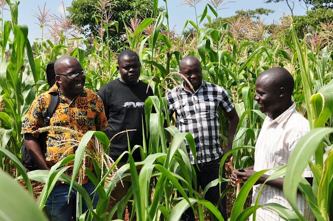 15 Reasons Nigerian Youths Do not Like a Career in Agriculture.