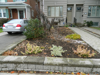 Toronto Fall Cleanup Bedford Park Front Garden after by Paul Jung Gardening Services