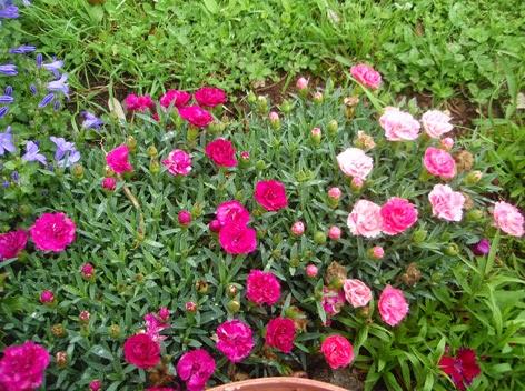 Flores todo el a o for Plantas para el jardin todo el ano