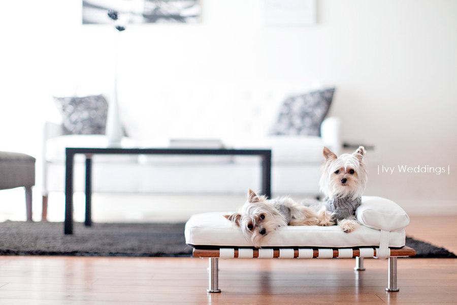 Looking For A Modern Design Bed Your Dog Or Cat Found These Adorable Pet Beds Over At Etsy