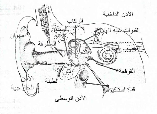رسم تخطيطي للجهاز السمعي الطرفي