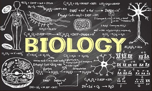 Biyolojik Kavramlar