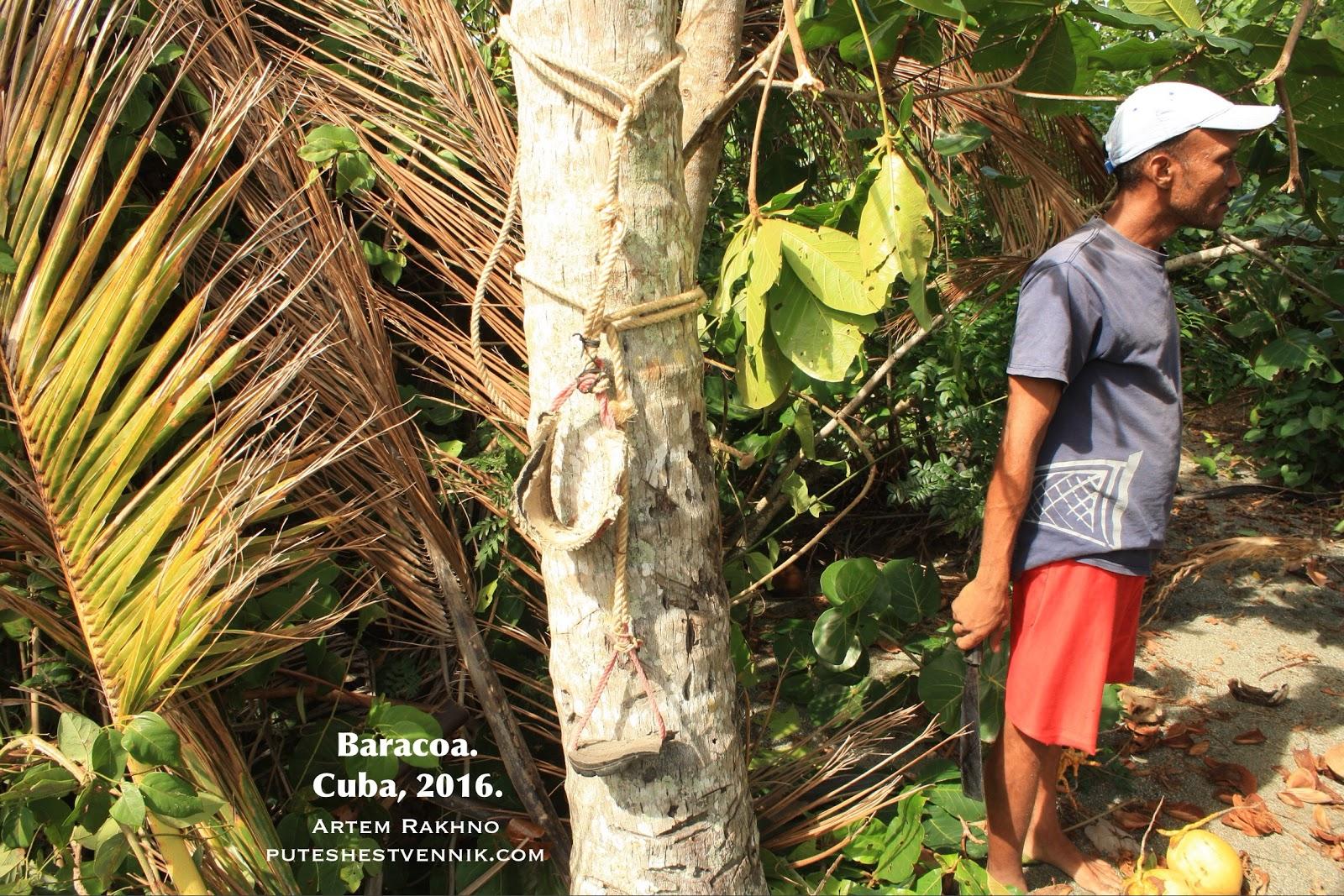 Кубинский собиратель кокосов и его мачете