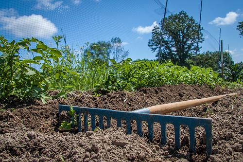 Le carbone du sol ne peut résoudre le changement climatique... mais il fait partie de la solution