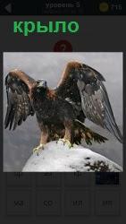 На большой высоте на снежном камне вцепившись когтями стоит хищная птица с поднятым крылом