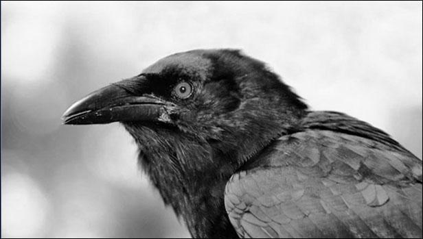 Burung Masuk Rumah