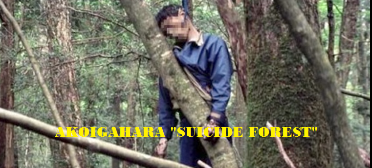 Aokigahara Forest Facts