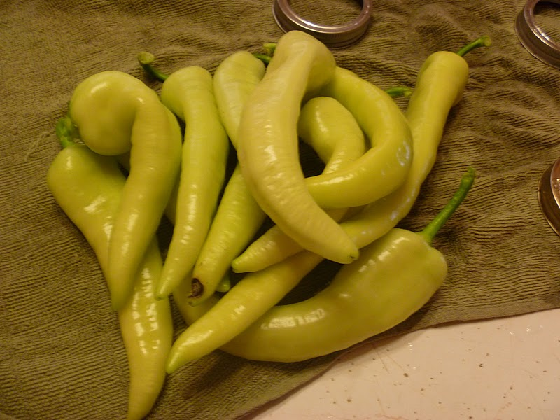 My homemade iowa life pickled banana pepper rings - How to can banana peppers from your garden ...