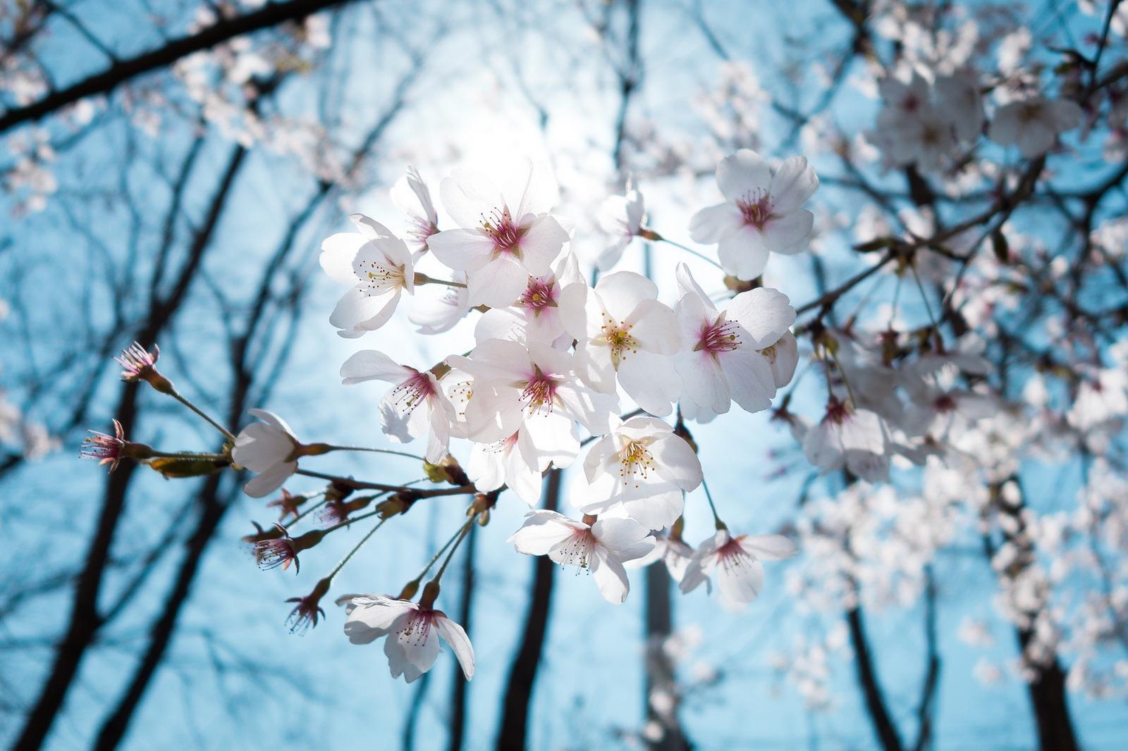 Wiosny czas!