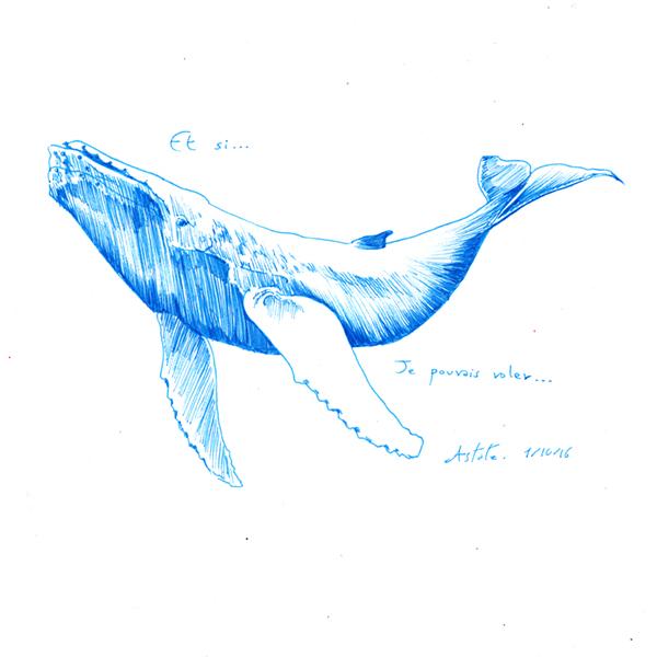 Et si... les baleines pouvaient voler - inktober 2016 d'Astate