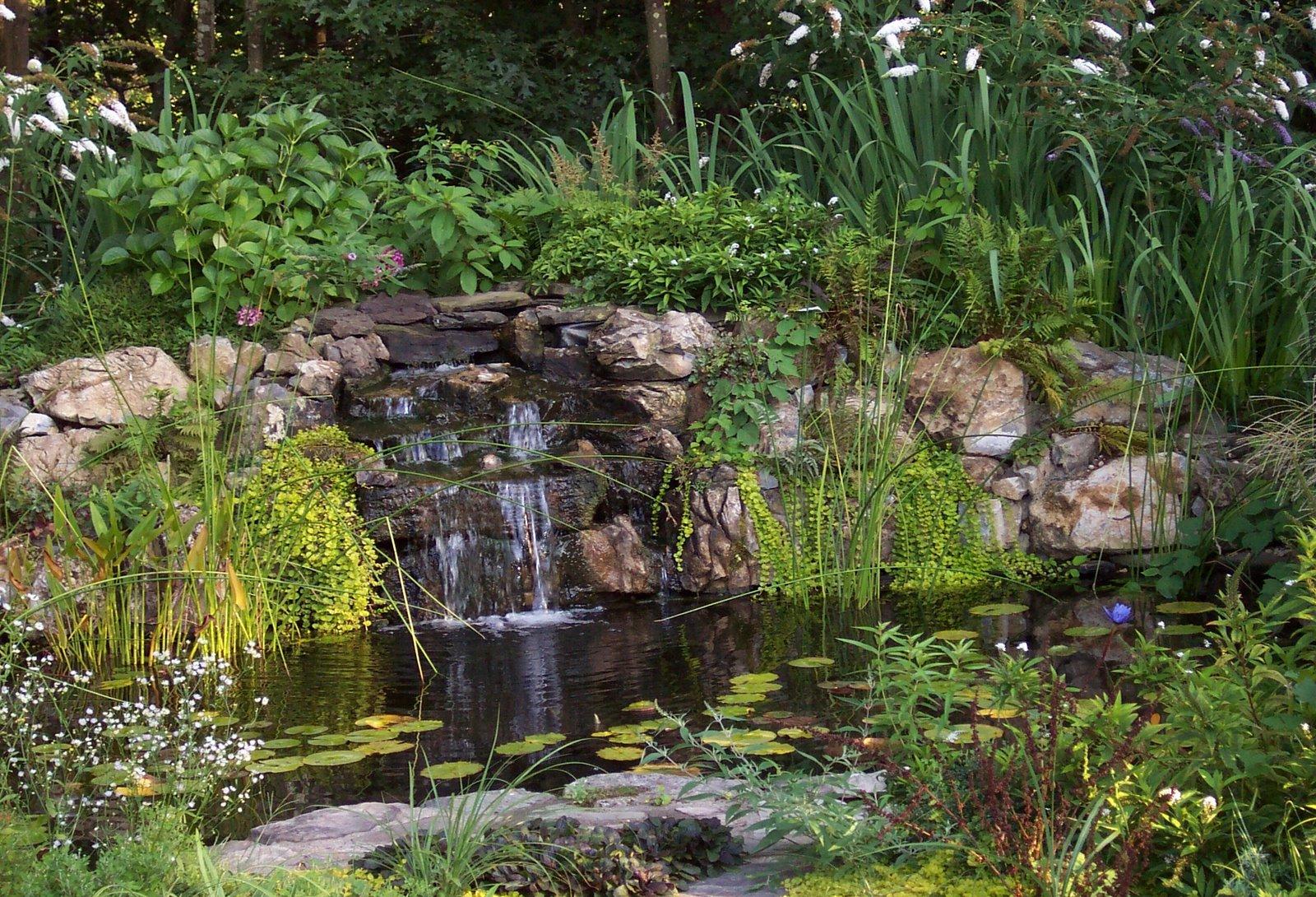Il giardino delle naiadi acquatiche officinali for Piante acquatiche laghetto