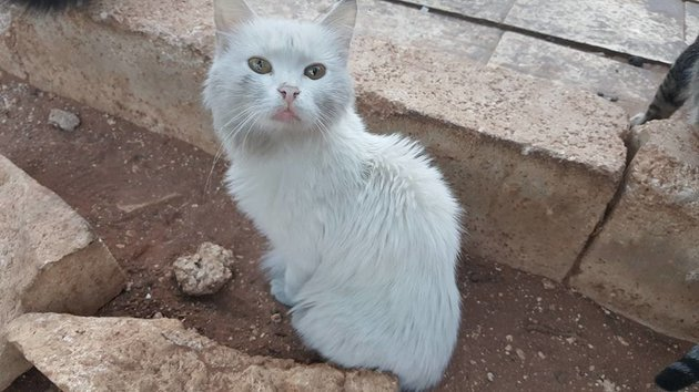 Mohammad Alaa Aljaleel and The Cat Man of Aleppo