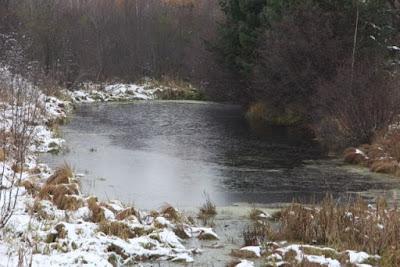 ice covered local pond, November 7, 2013