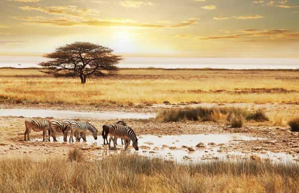Image zebras-namibia-africa