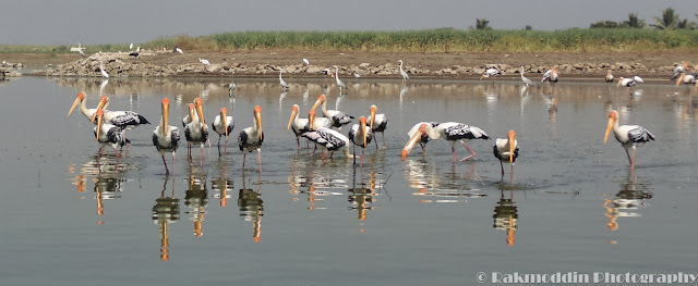 Migrated bird watching at Bhigwan kumbargaon - Simply amazing experience