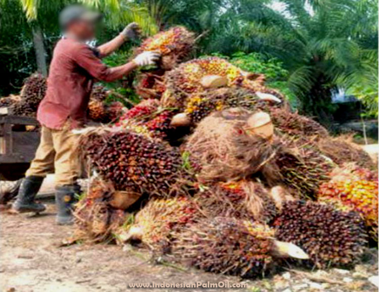 Indonesian palm oil competitiveness againts soya oil