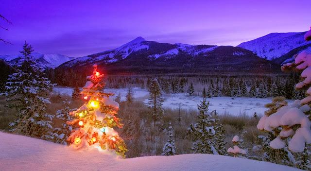 Foto met een boom met lichtjes