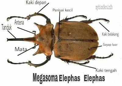 strutur kumbang - mybiosfer.info