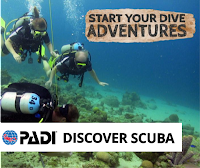 http://www.thedivebus.com/learn/start-diving/padi-discover-scuba-dive/