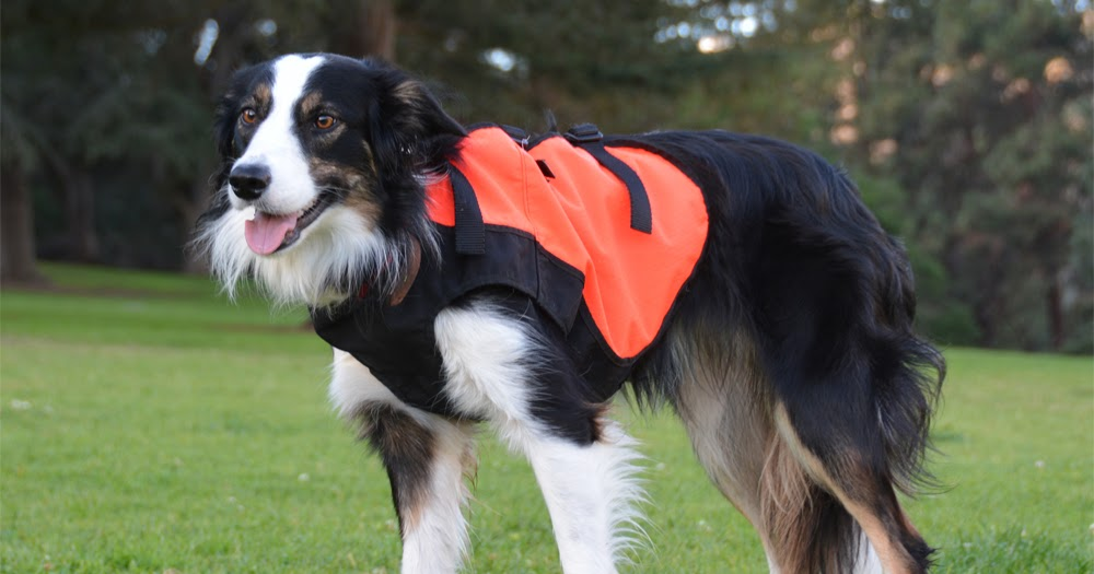 The Dog Geek How To Protect Your Dog From Foxtails