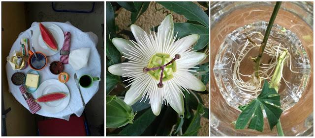 Runder Esstisch: Draufsicht - Passionsblume, ein gezackter Kreis - Stecklinge, die im Runden Glas wurzeln