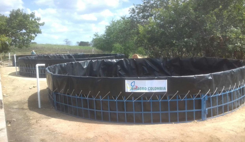 Asesoria y estanques para cultivo de tilapia mojarra roja for Crianza de truchas en estanques