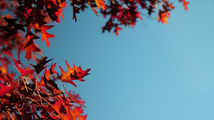Wallpaper: Autumn Mood