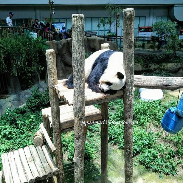 Zoo Negara, kou tunggu kami datang !!