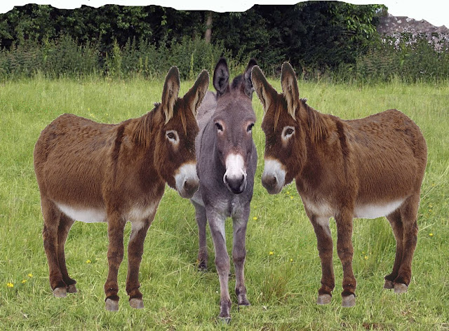 animal facts in hindi,facts about donkey,interesting facts about donkey,about donkey in hindi,donkey,facts about donkey for kids,essay on donkey in hindi,hindi,facts in hindi,fun facts about donkeys,donkey essay in hindi,donkey in hindi