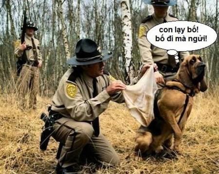 Chó nghiệp vụ vui