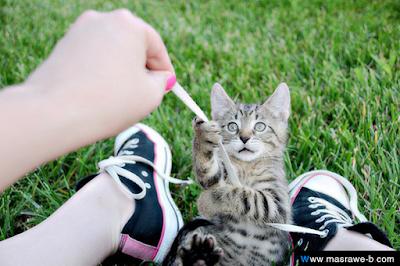 صور صور قطط كيوت 2020 خلفيات قطط جميلة جدا cats21.png