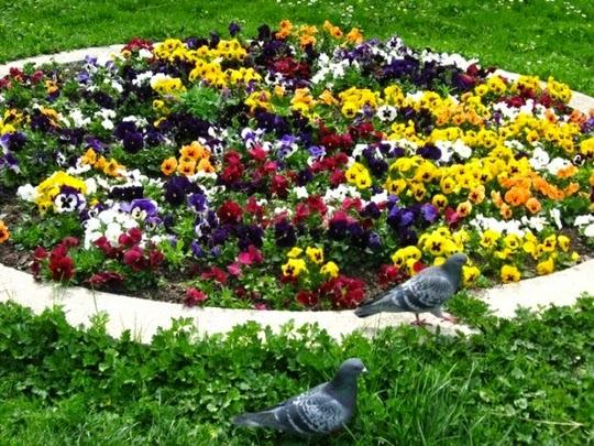 #3 Nice Flowers Garden Wallpapers
