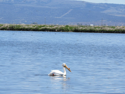Tule Lake National Wildlife Refuge California