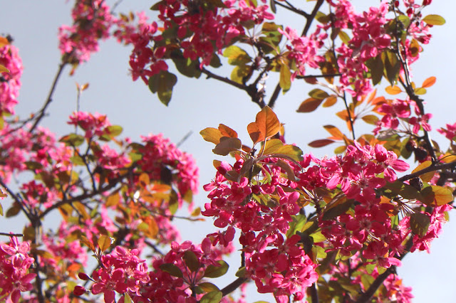 Cherry blossom in Camden Town - London lifestyle blog