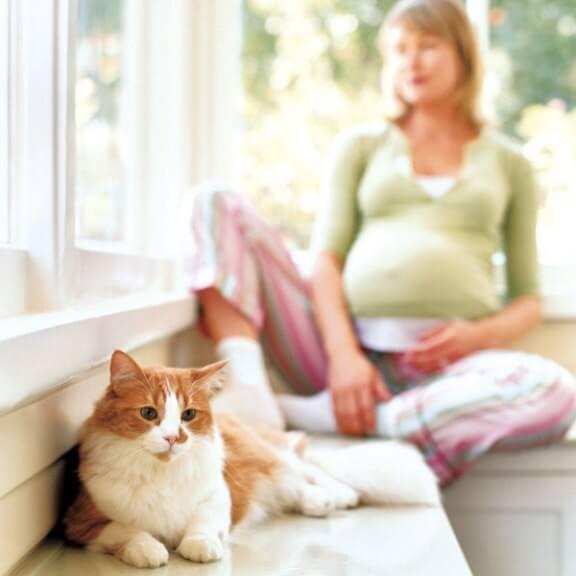 kucing dan ibu mengandung bahaya toxoplasmosis