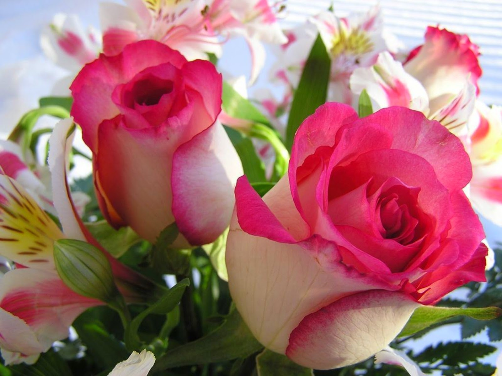 Beautiful Beautiful Flowers Hd Images Download Top