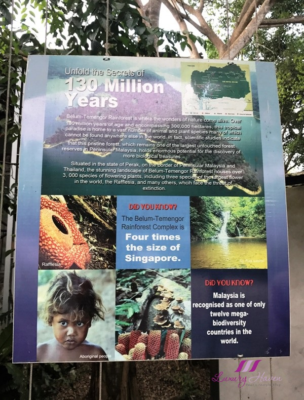 royal belum rainforest four times of singapore
