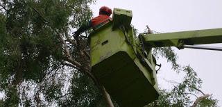 Γιάννενα: Κυκλοφοριακές Ρυθμίσεις Τη Δευτέρα Λόγω Κλαδέματος Δέντρων