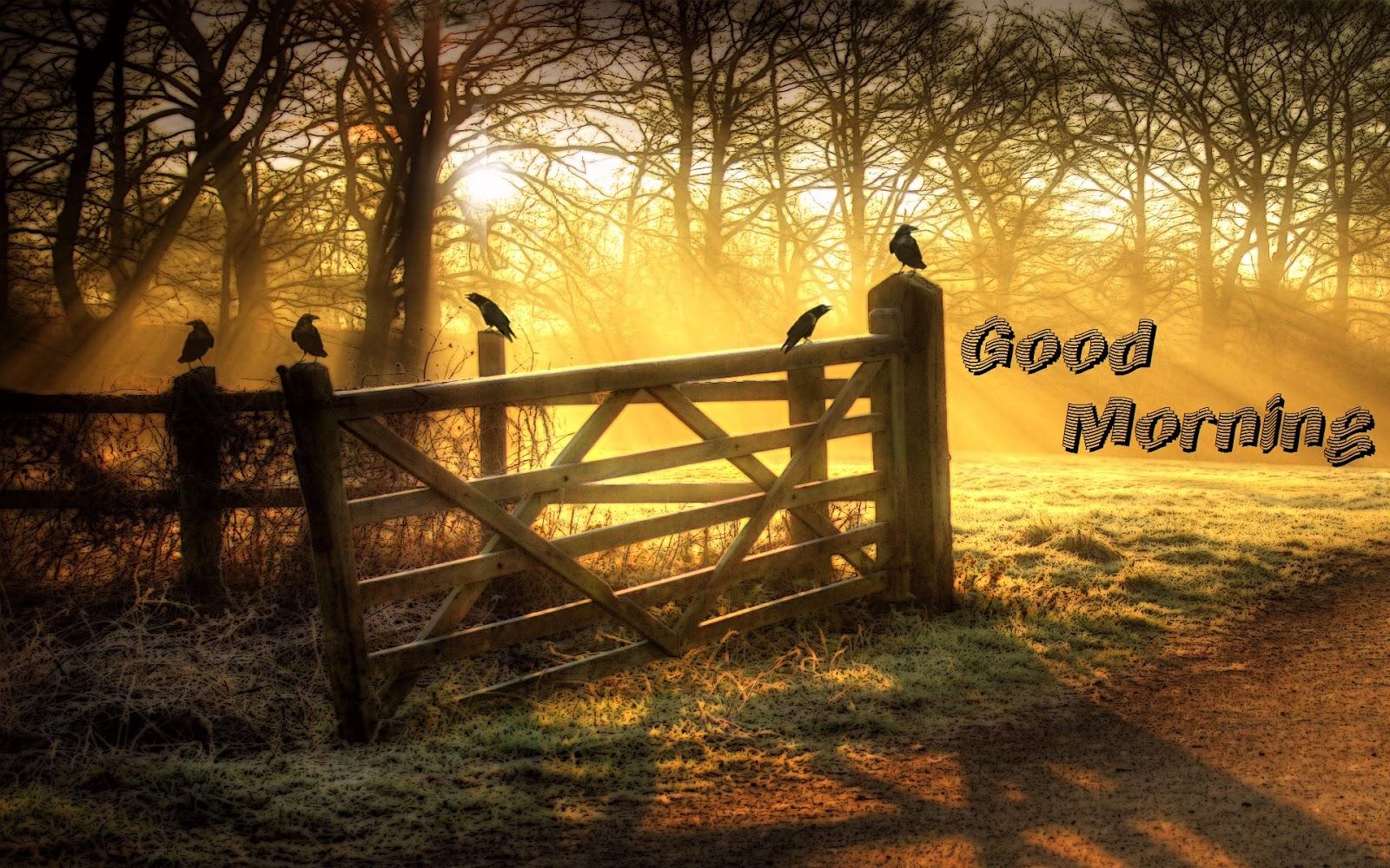 Hd Wallpaper Girl Cute Wonderful Good Morning Nature Cards Images Pics