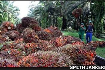 Lowongan Kerja Pekanbaru : Kebun Sungai Jernih Palm Oil Plantation September 2017