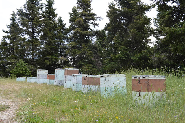 ΕΚΤΑΚΤΟ: Μηνύσεις για μελίσσια σε δρόμους. Η Ορεινή Μέλισσα επικοινώνησε με το δασαρχείο!