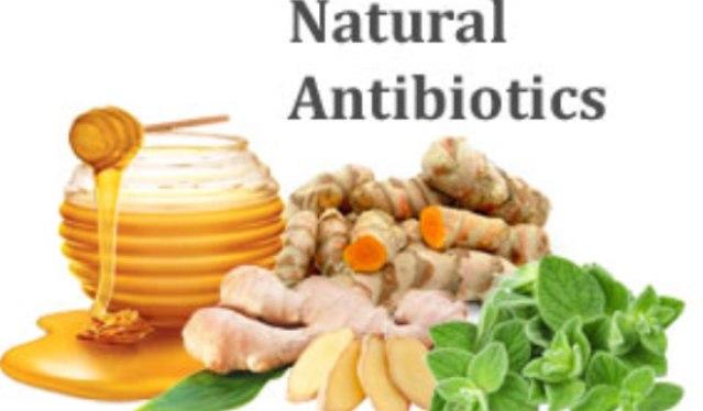 Inilah 5 Antibiotik Alami Yang Paling Ampuh Untuk Mencegah Terjadinya Infeksi