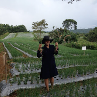 Perkebunan bawang merah garuda farm