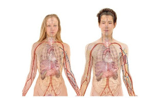two people's physical bodies with organs