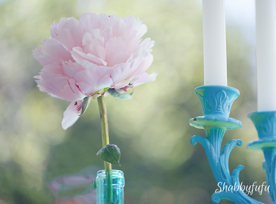 pink peony in a blue bottle