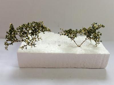 Seamoss Flowering Bushes