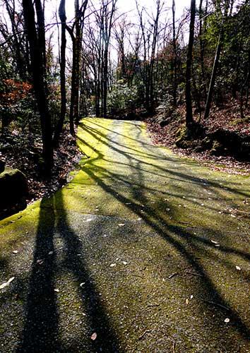 The trail up to Sekimondo, Shodoshima.