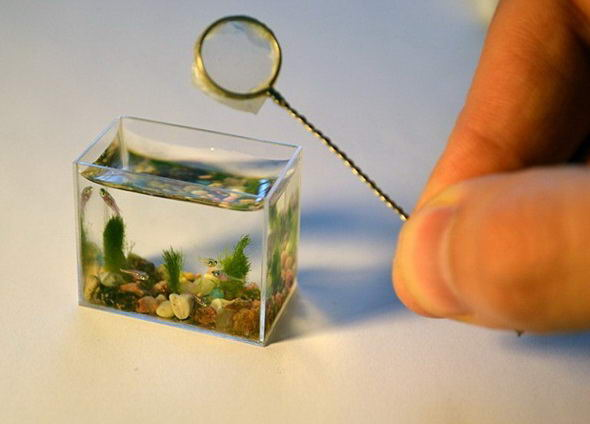 Akuarium paling kecil di dunia...