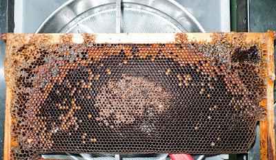 repor abejas02 - Las abejas, un eslabón fundamental para el medio ambiente - El Apicultor Español: Actitud y Aptitud Apícola