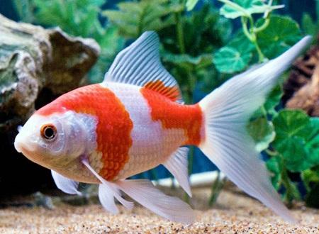 Bagai Ikan Pulang Ke Lubuk
